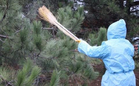 Борьба с вредителями и болезнями  у хвойных растений