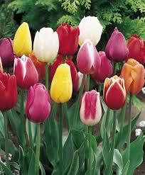 Тюльпаны Вариация Микс (луковицы) набор 10 шт