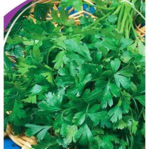 Семена петрушки листовая Урожайная, 3 г