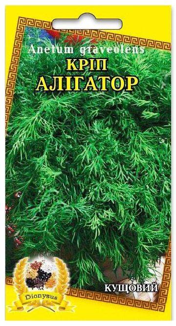 Семена укропа Аллигатор