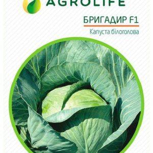 Семена капусты Бригадир F1 (Brigadier F1), 100 семян Clause France