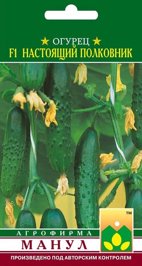 Семена огурца Настоящий Полковник F1, 10 семян