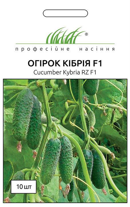 Семена огурца Кибрия F1, 10 семян Rijk Zvaan (Голландия)