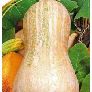 Семена тыквы Изюминка