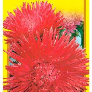 Семена цветов Астра Ассоль