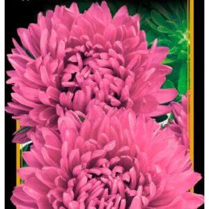 Семена цветов Астра Оксана