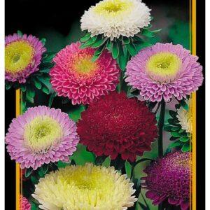 Семена цветов Астра Смесь Парад Цветов