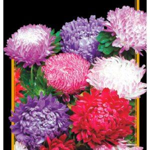 Семена цветов Астра Смесь Пионовидная