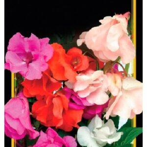 Семена цветов Бальзамин Смесь Низкорослая
