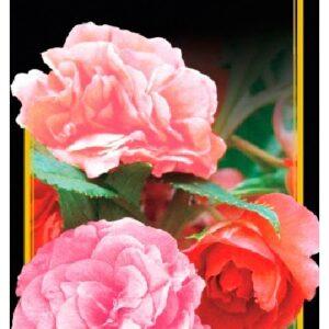 Семена цветов Бальзамин Смесь Высокорослая