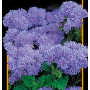 Семена цветов Агератум Голубой Бал