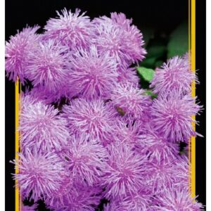 Семена цветов Агератум Розовый Шар