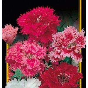 Семена цветов Гвоздика Китайская Смесь Махровая